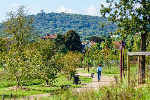 Le parc du Sansonnet